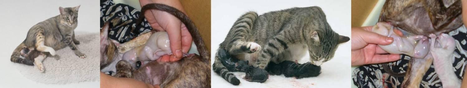 Как выглядит лишай у кошек