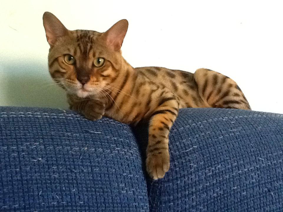 Договор на вязку кошек скачать